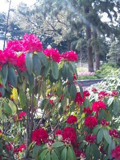ランドお花